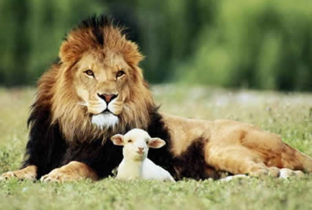 http://www.natlauzon.com/images/lion-and-the-lamb.jpg